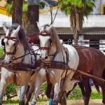 Insider-Access-horses